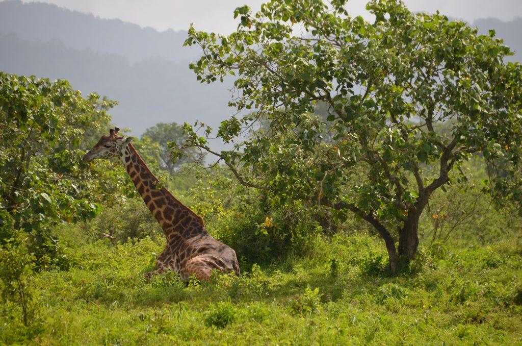 madame m blog voyage  les animaux d'Arusha