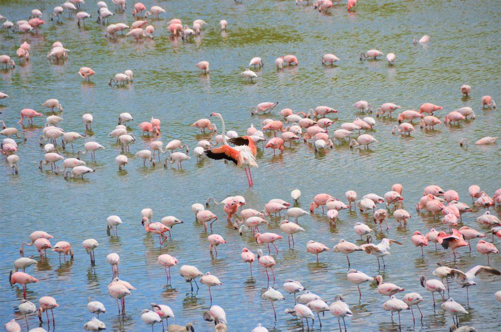 madame m blog voyage  notre safari en Tanzanie  les animaux d'Arusha