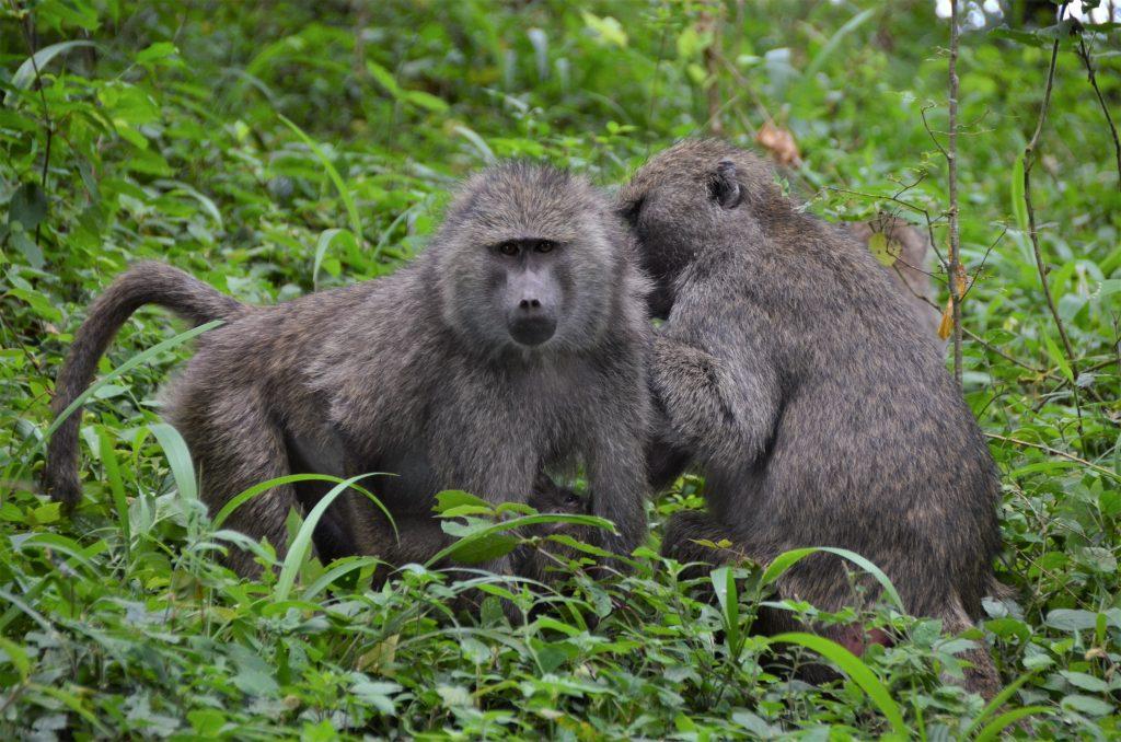 madame m blog voyage  notre safari les animaux de Manyara