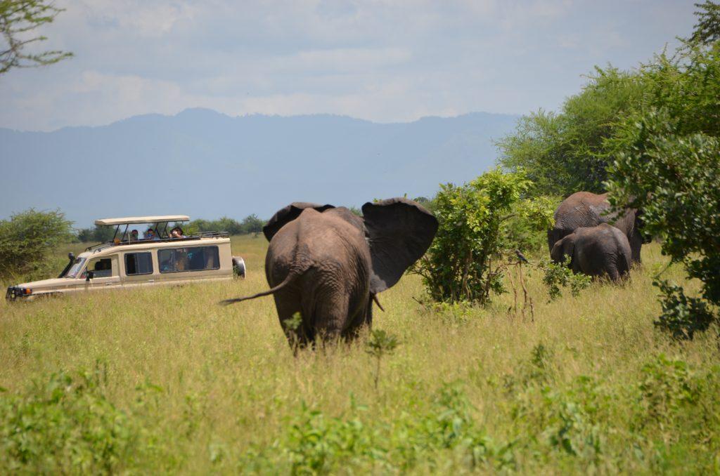 madame m blog voyage  notre safari en Tanzanie  les éléphants de Tarangire