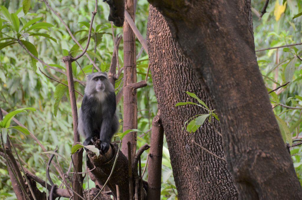 madame m blog voyage  Tanzanie  les animaux de Manyara