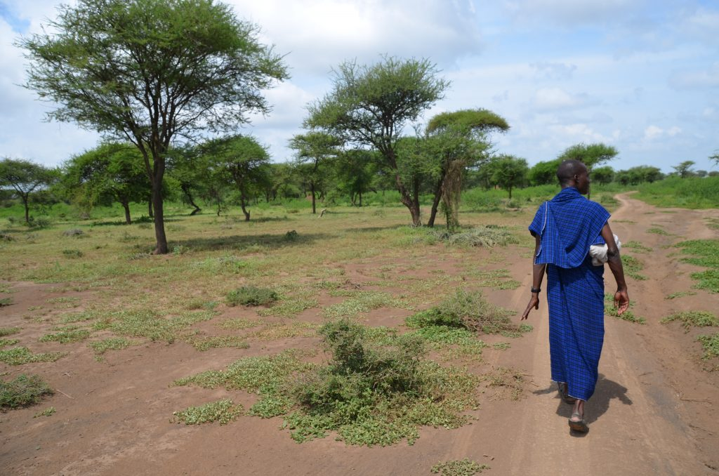 Madame M les Voyages  Notre rencontre avec les Massaïs de Tanzanie Un Massaï