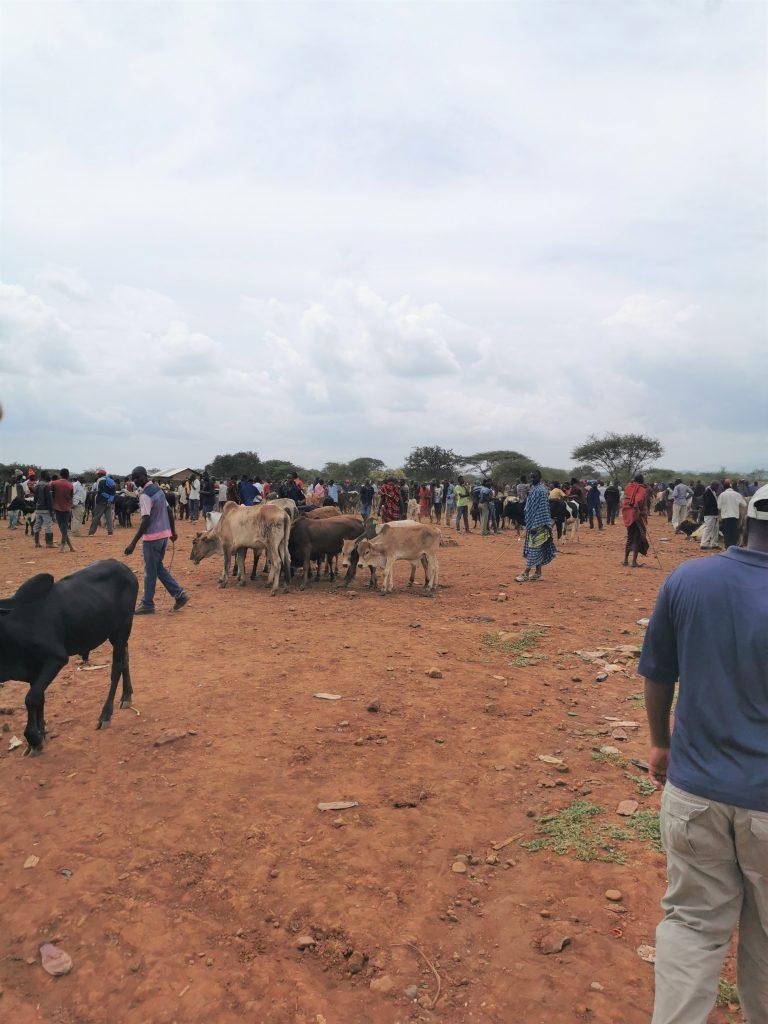 Madame M les Voyages  Notre rencontre avec les Massaïs de Tanzanie la vente des vaches